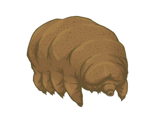 tardigrade stuffed animal