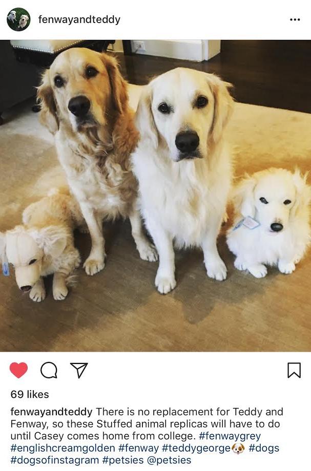 petsies custom stuffed dog