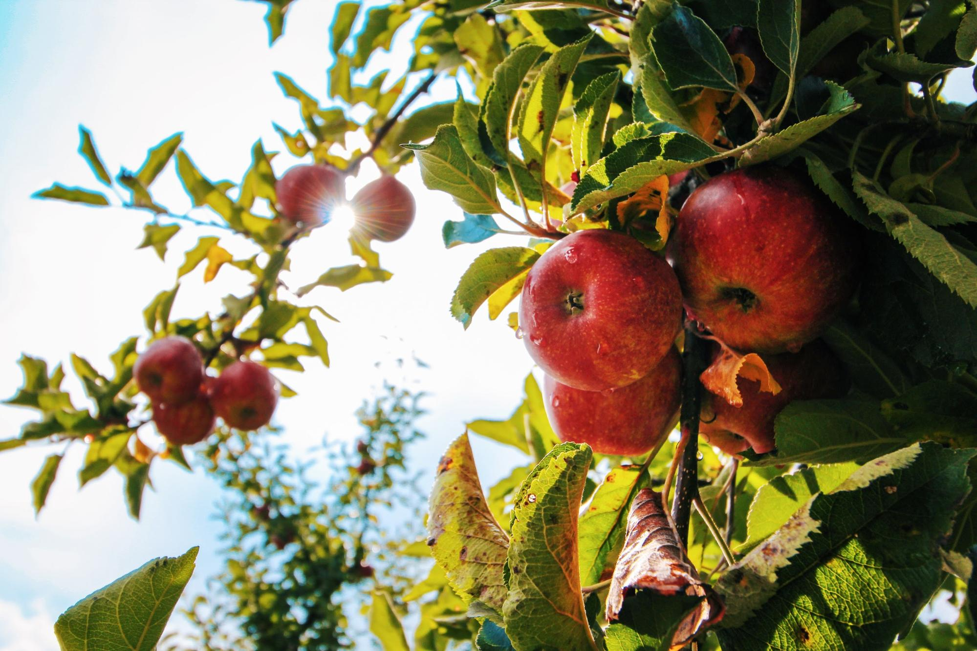 apple picking fun fall activities for kids