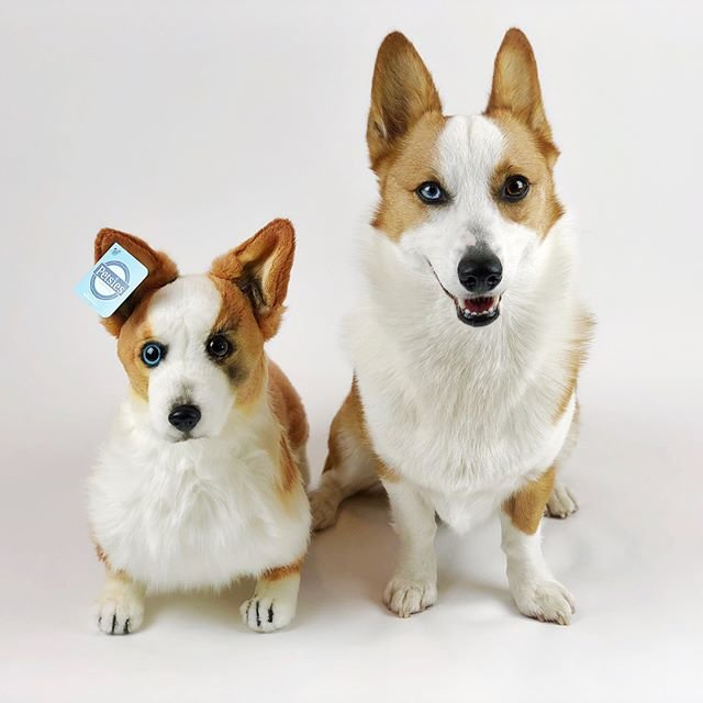 custom stuffed animal of your pet