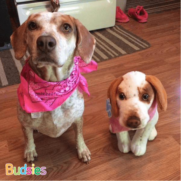 Stuffed Animals of your dog