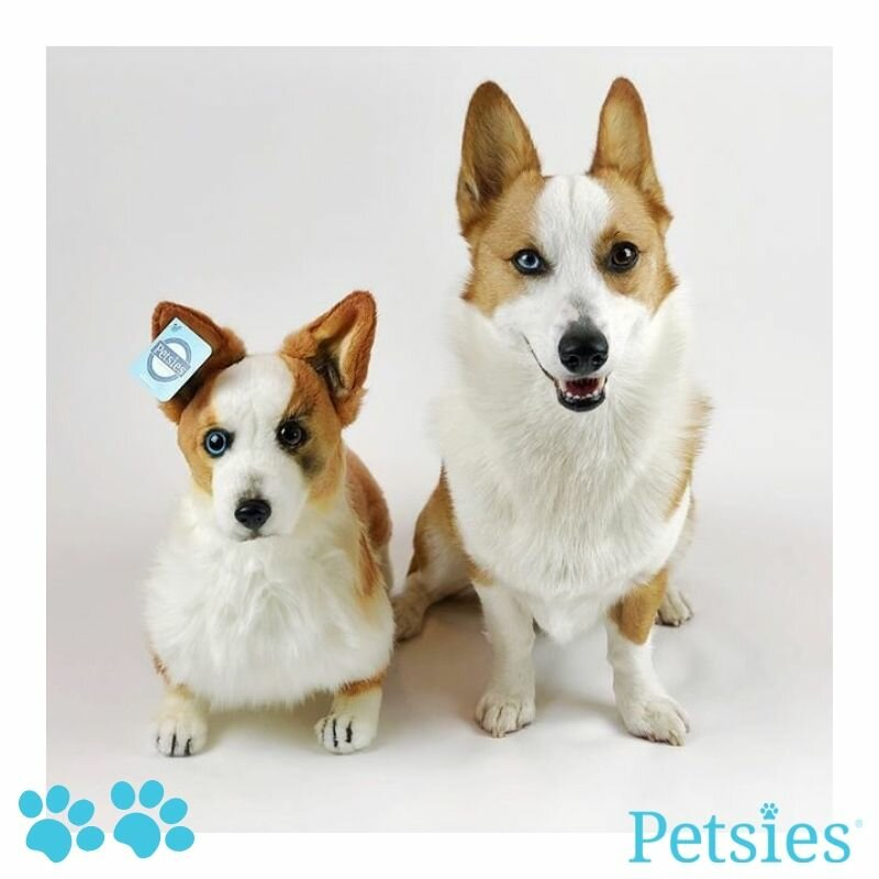 1178f7092400 Petsies Custom Stuffed Animals of Pets | Budsies