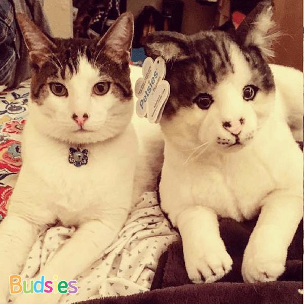 cat Stuffed Animals