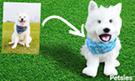 Dog photo into a stuffed animal